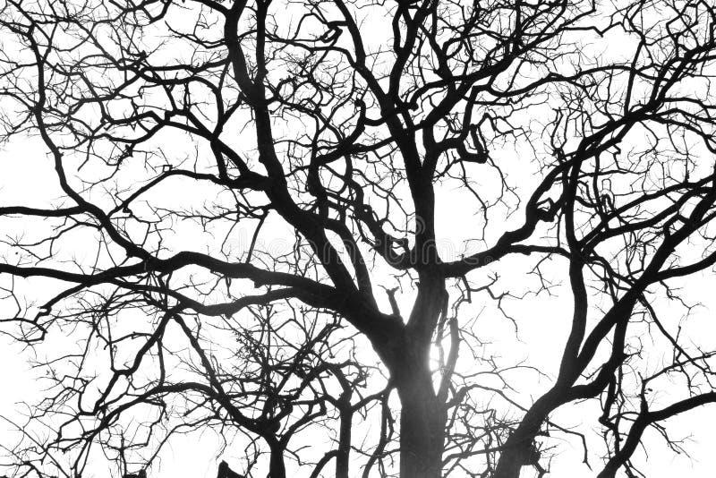 Branchement d'arbre mort images stock