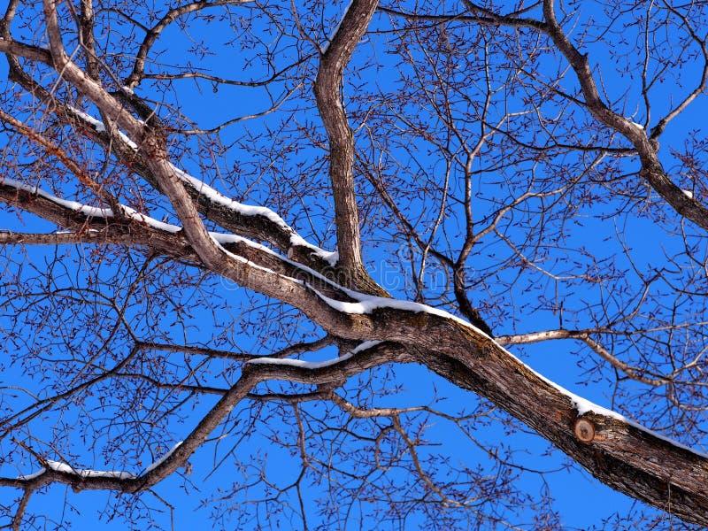 Branchement d 39 arbre sans feuilles image stock image du - Arbres sans feuilles ...