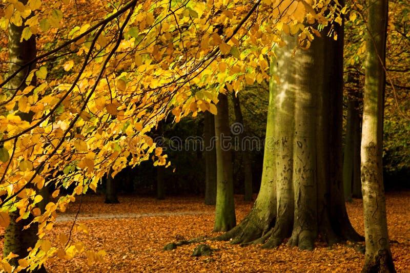 Branchement d'automne images stock