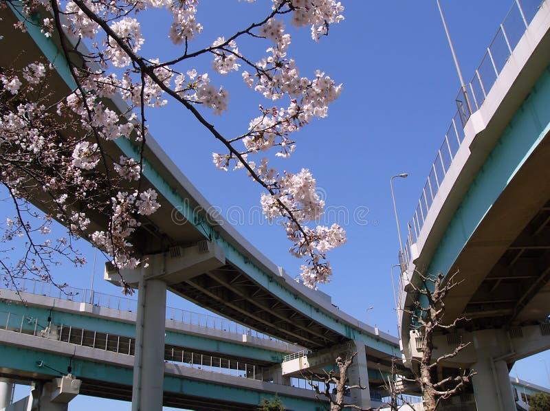 Branchement de cerise de fleur dans la ville photographie stock libre de droits