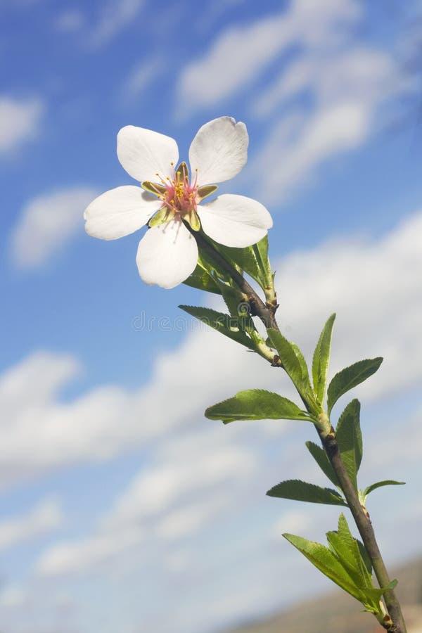 Branchement de fleur avec une fleur photo libre de droits