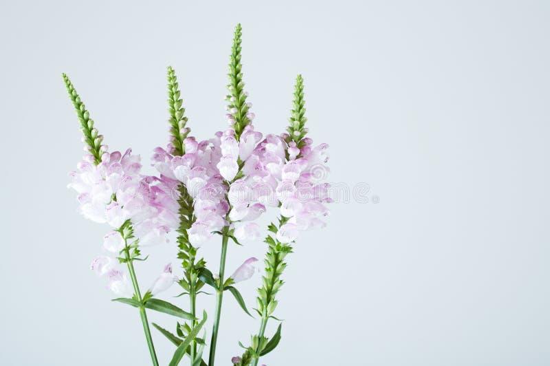 Branchement de fleurs images libres de droits