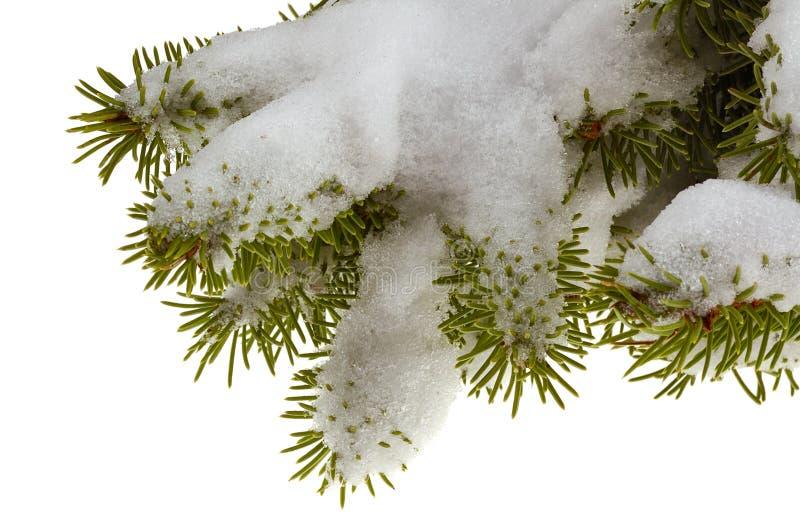 Branchement de neige photos libres de droits