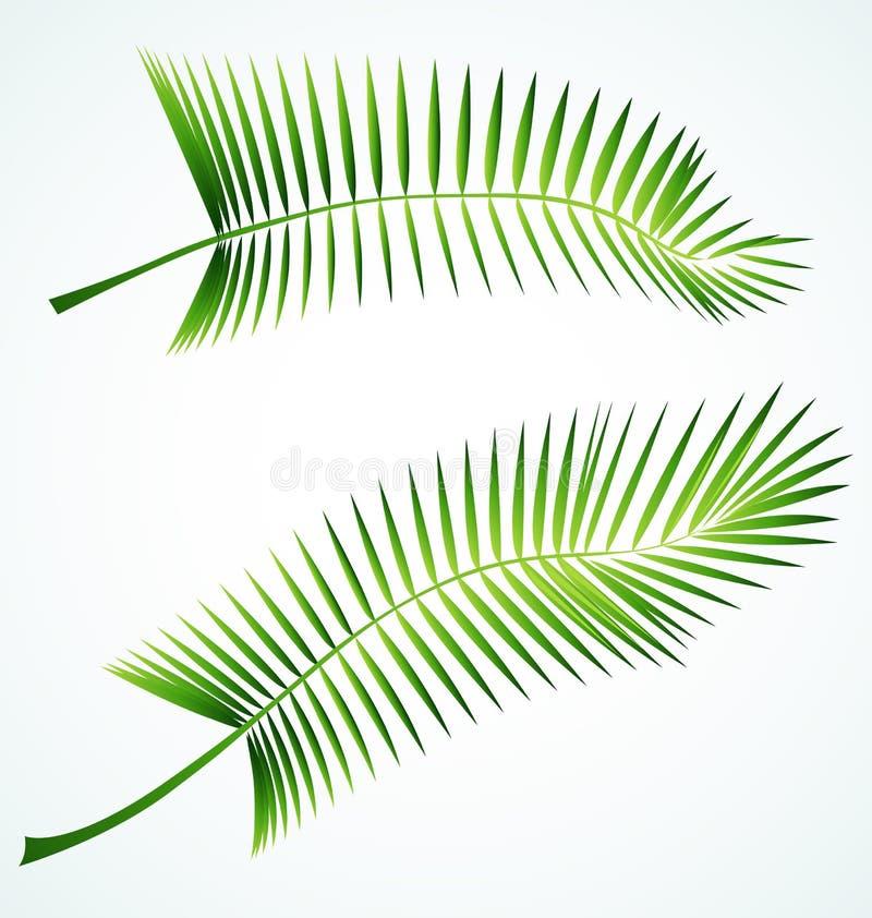 Branchement de Palme illustration de vecteur