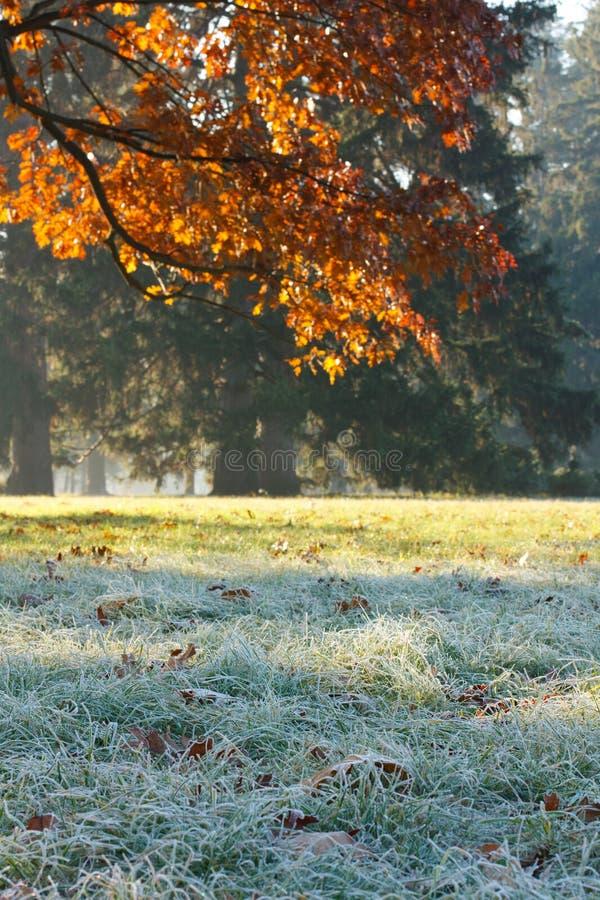 Branchement du chêne et de l'herbe couverts de gel photographie stock libre de droits