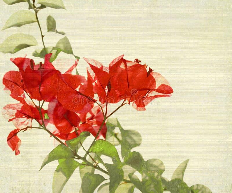 Branchement rouge de bouganvillée sur le fond en bambou illustration stock