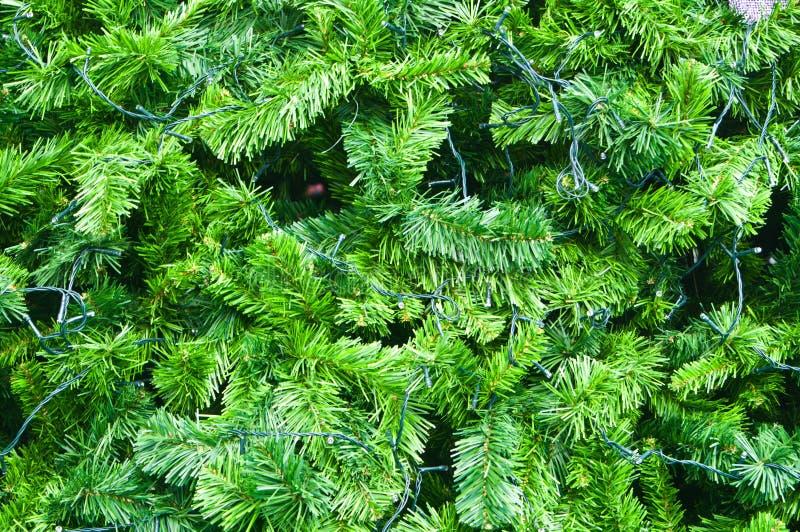 Branchements épineux verts d'arbre de Noël photo stock
