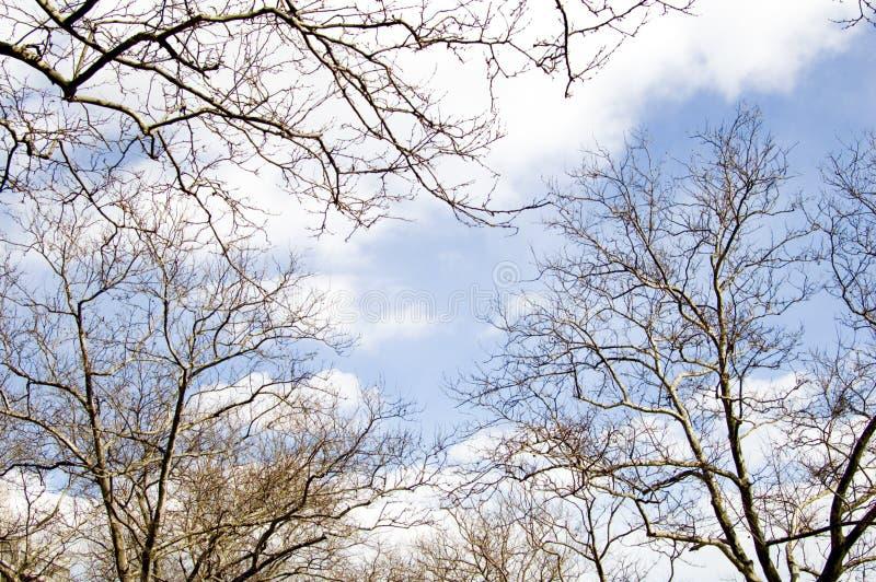 Download Branchements photo stock. Image du seulement, bleu, nuages - 86406