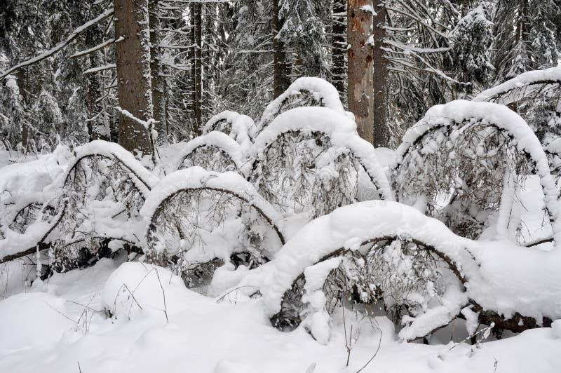Branchements couverts de neige images libres de droits