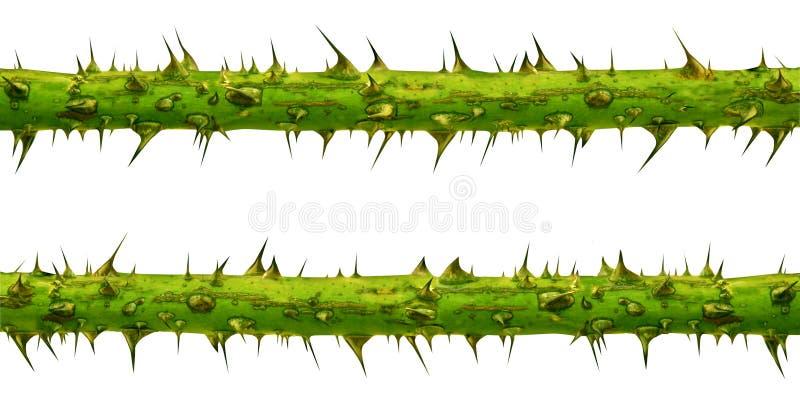 Branchements d'épine illustration de vecteur