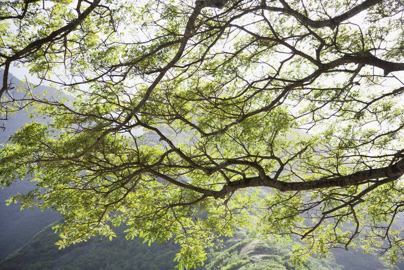 Branchements d'arbre. photos libres de droits