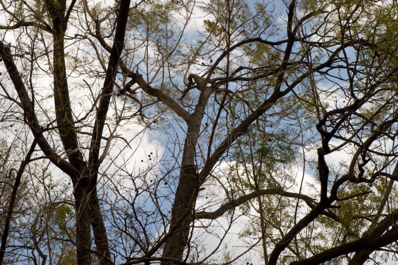 Branchements d'arbre photo stock