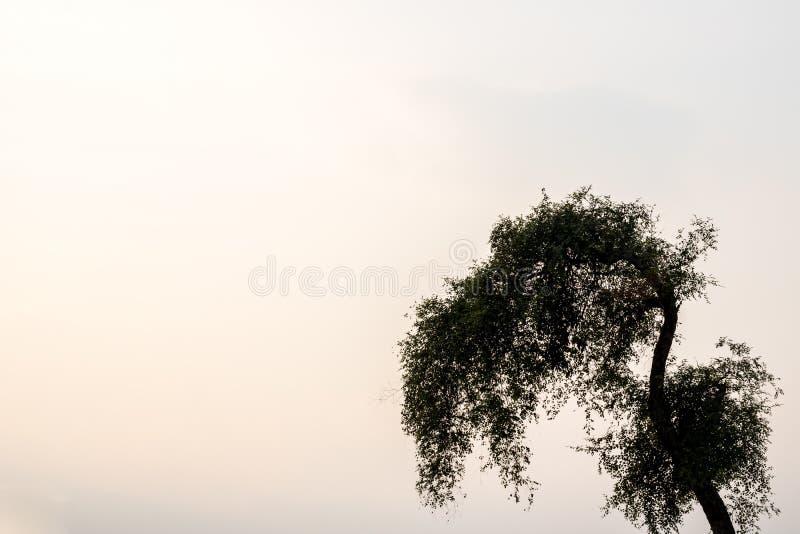 Branchements d'arbre photos stock