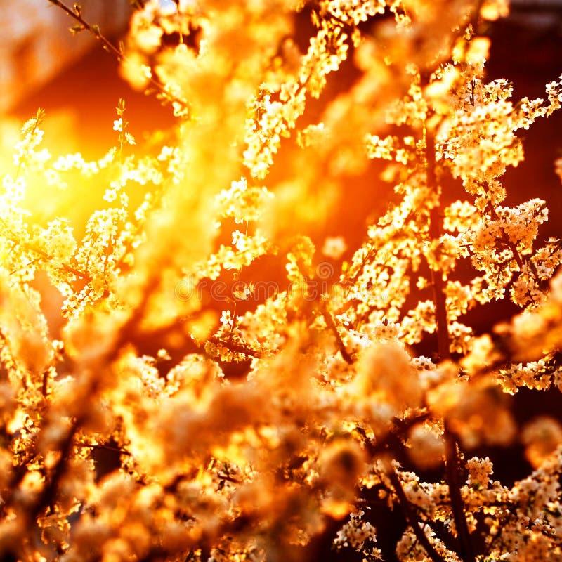 Branchements d'arbre au printemps image stock