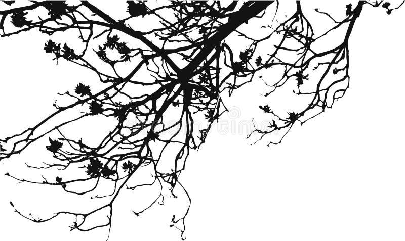 Branchements d'arbre de fleur illustration de vecteur