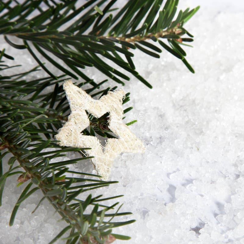 Branchements d'arbre de Noël photos stock