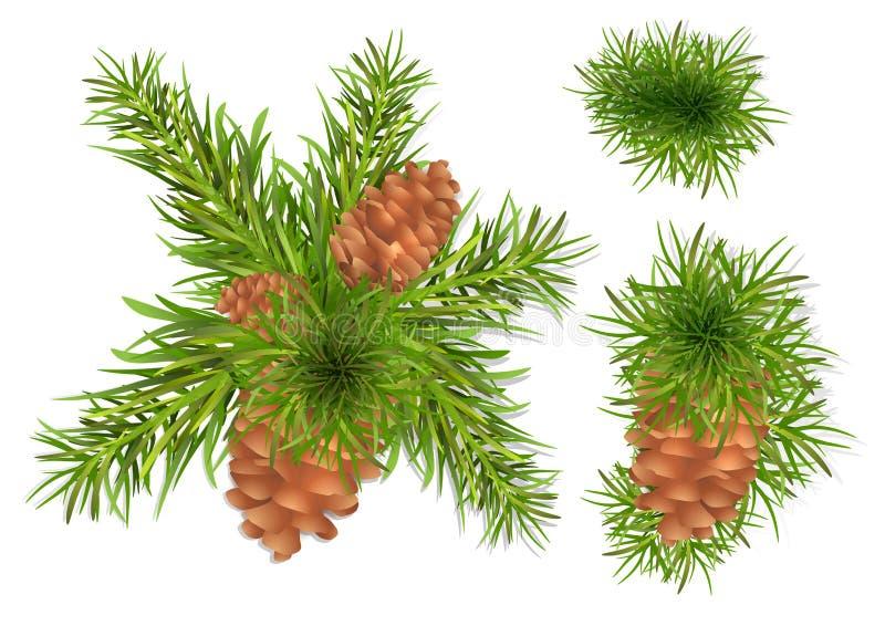 Branchements d'arbre de sapin illustration libre de droits