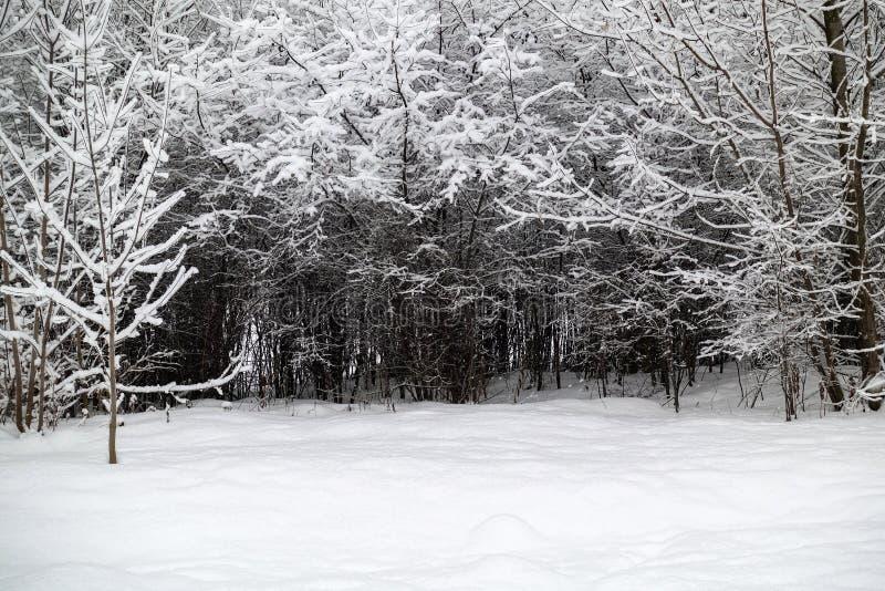 Branchements d'arbre Snow-covered Arbres dans la neige Jour givré d'hiver photographie stock