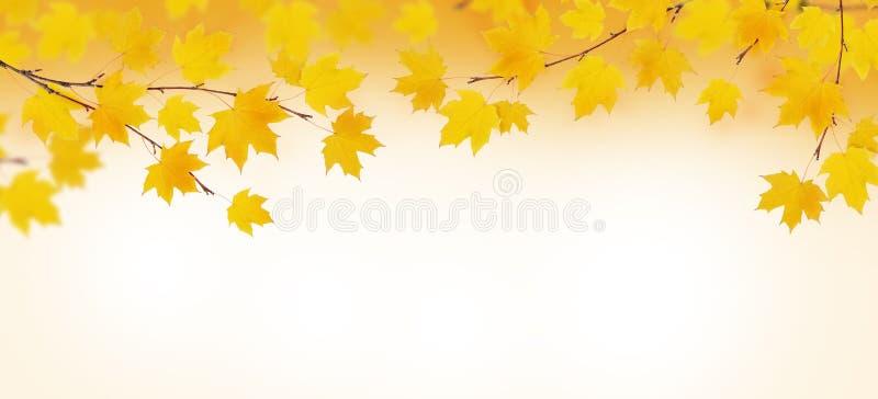 Branchements d'automne avec les lames jaunes illustration de vecteur