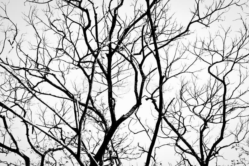 Branchements dans le noir sur le blanc photographie stock
