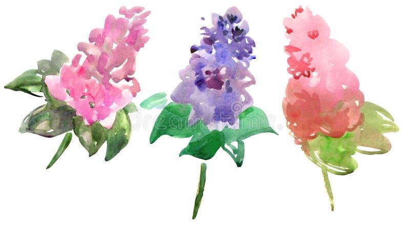 Branchements lilas illustration de vecteur