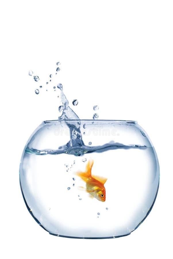 Brancher aux poissons d'aquarium images libres de droits