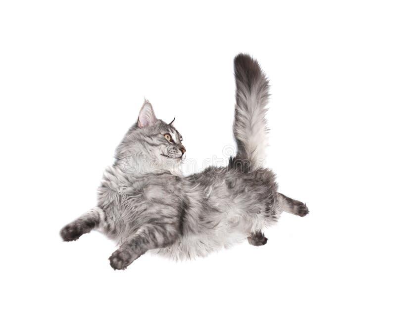 brancher de chat photographie stock libre de droits