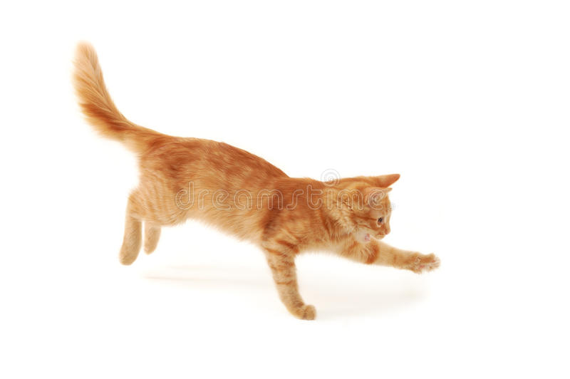Brancher de chaton photographie stock libre de droits