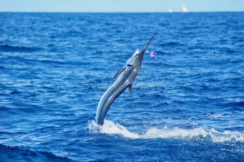 Brancher de marlin blanc images libres de droits
