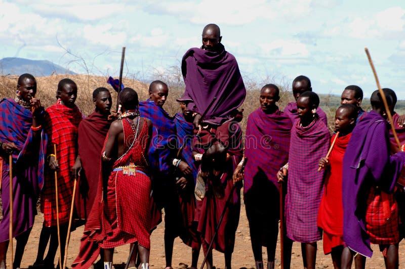 Brancher de masai images stock