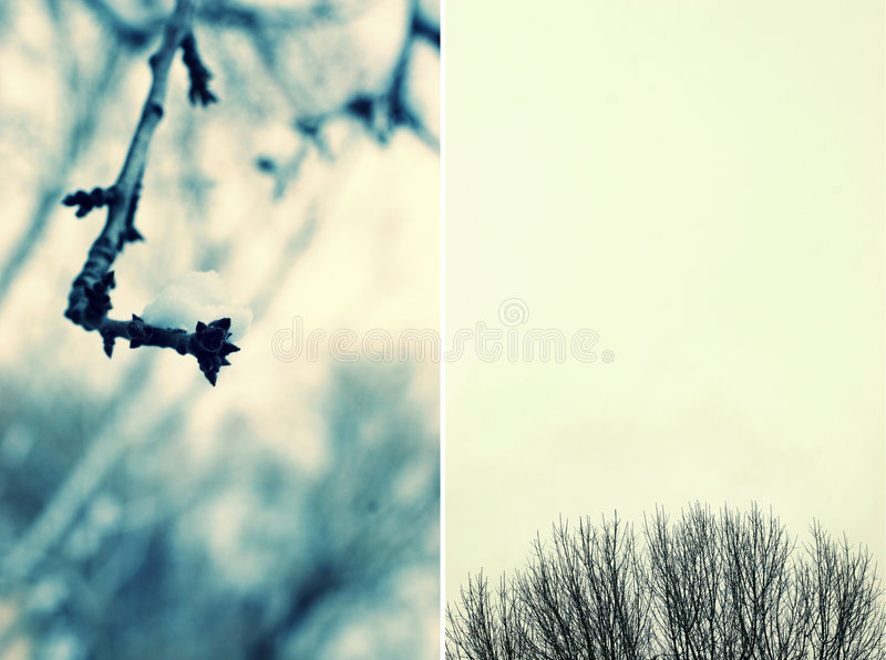 Download Branches stock photo. Image of seasonal, close, black - 4703022