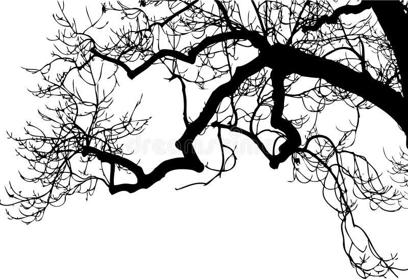 Branches Royalty Free Stock Photos