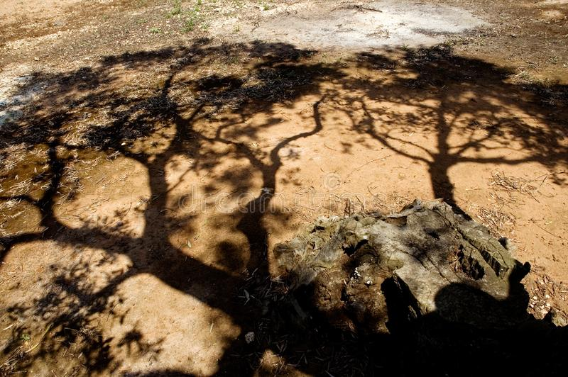 Download Branches stock image. Image of tree, leaf, nature, landscape - 6456109