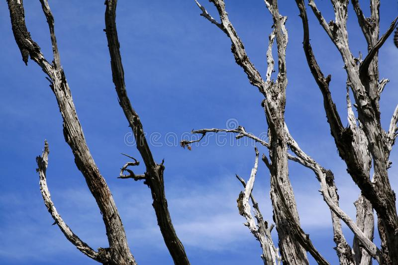 Branches abstract stock images
