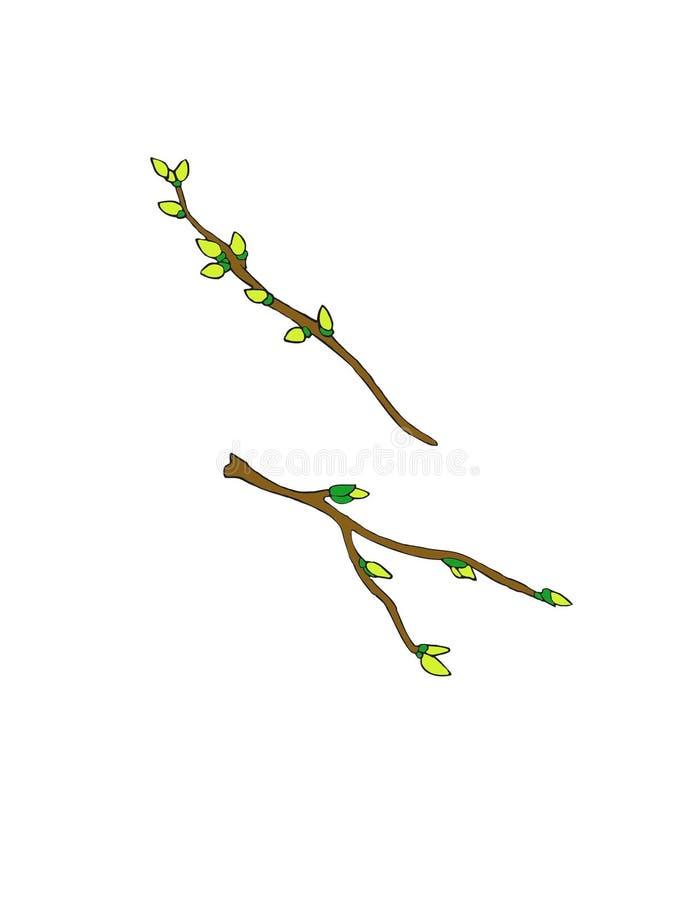 2 branches avec de nouveaux bourgeons commençant juste à se développer illustration stock