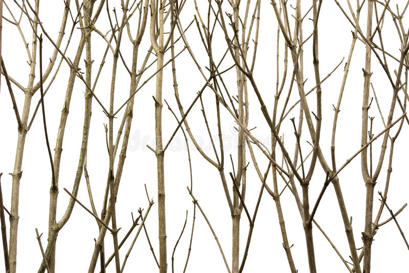 Branches Background