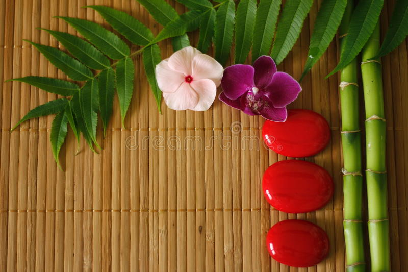 Branches of bamboo and foliage with red pebbles arranged in lifestyle zen and flowers orchids on wooden background stock image