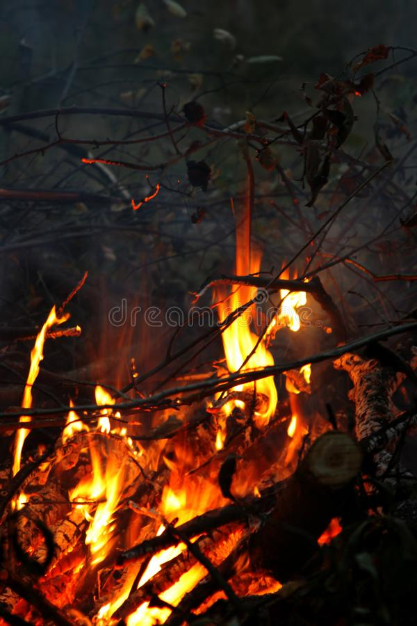 Branches bright burning in the fire. In night stock photo