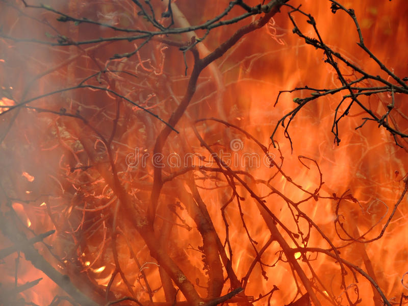 The branches in the burning pyre. Background of the branches in the burning pyre stock photos
