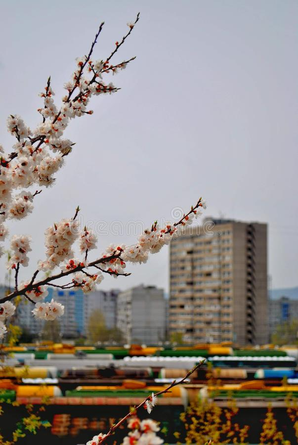 Branches of cherry blossoms on a blurred background of the railway station and residential buildings. Shot made in the city of Togliatti, Russia stock photos