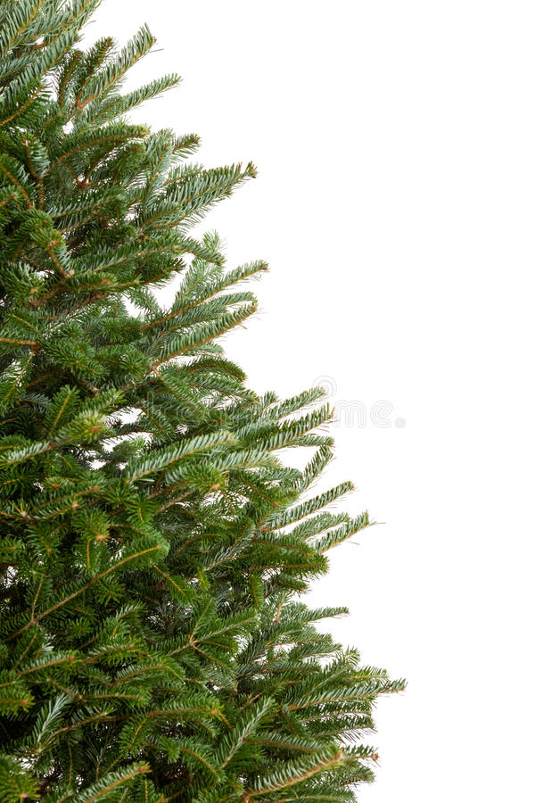 Branches of a Christmas tree royalty free stock image