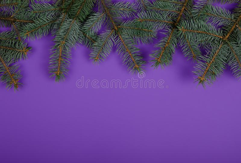 Branches of Christmas tree on purple background. stock images