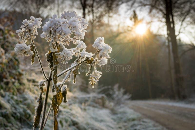 Branches, Close, -up, Cold stock photos