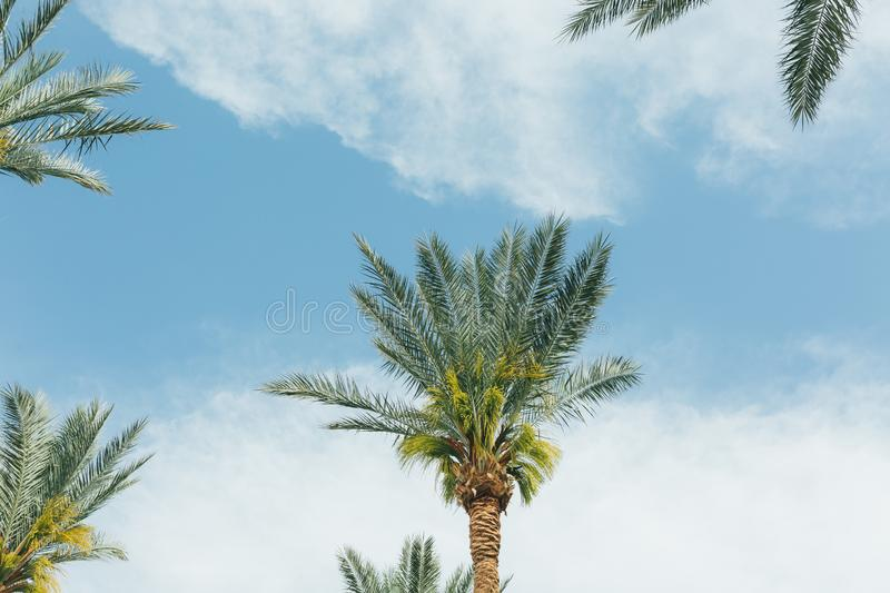 Branches of coconut palms under blue sky royalty free stock photos