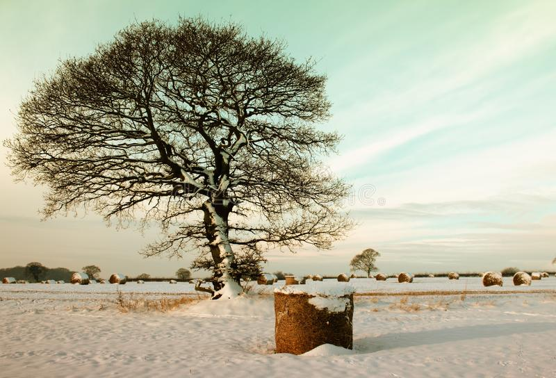 Branches, Cold, Field royalty free stock photos