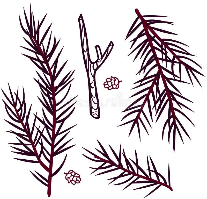 Branches coniféres de bande dessinée de vecteur des cônes de mélèze illustration libre de droits