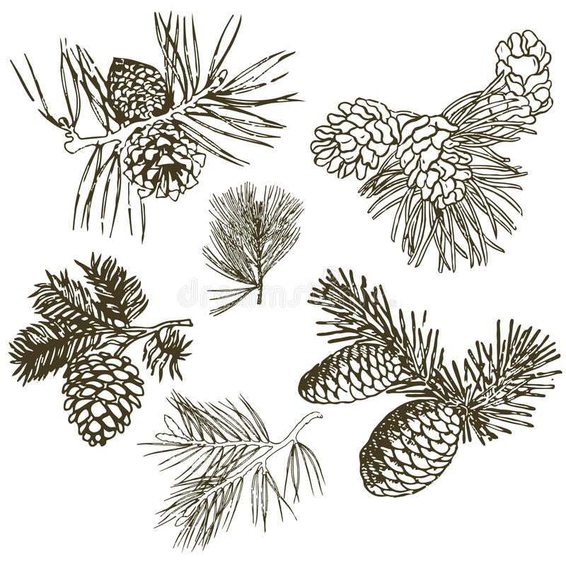 Branches coniféres des arbres avec des cônes : pin, sapin, sapin, cypr illustration stock