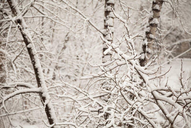 Branches couvertes de neige en parc Fond de chute de neige d'hiver tranquille blanc images stock