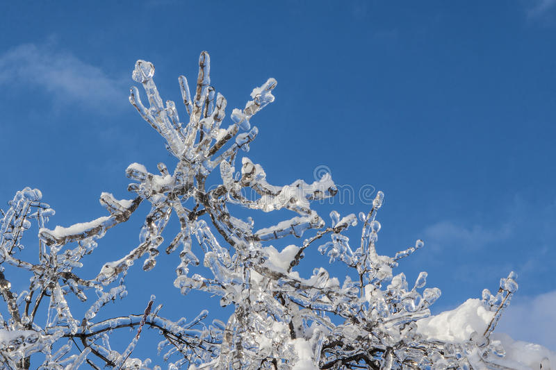 Download Branches Covered With Ice In Sunlight Stock Image - Image: 38709323