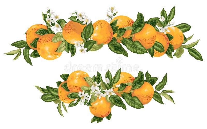 Branches d'agrume de pamplemousse d'elementwith de décor de titre de vecteur dans l'illustration réaliste de conception graphique illustration libre de droits